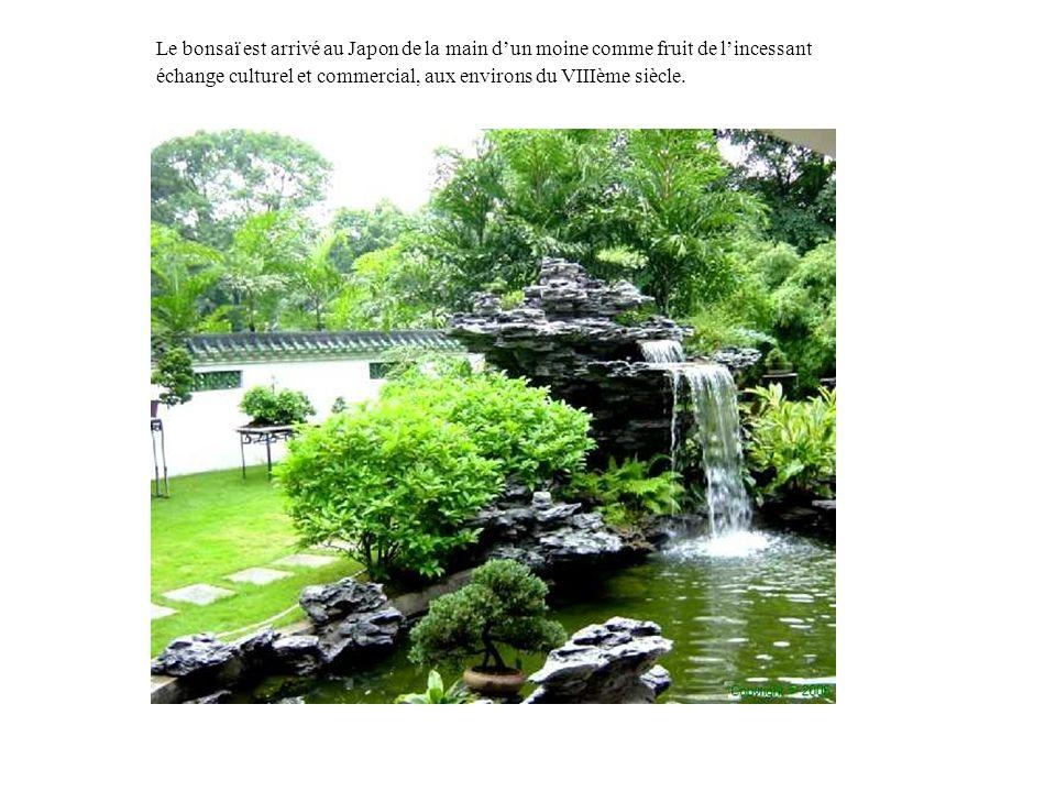 Le bonsaï est arrivé au Japon de la main dun moine comme fruit de lincessant échange culturel et commercial, aux environs du VIIIème siècle.