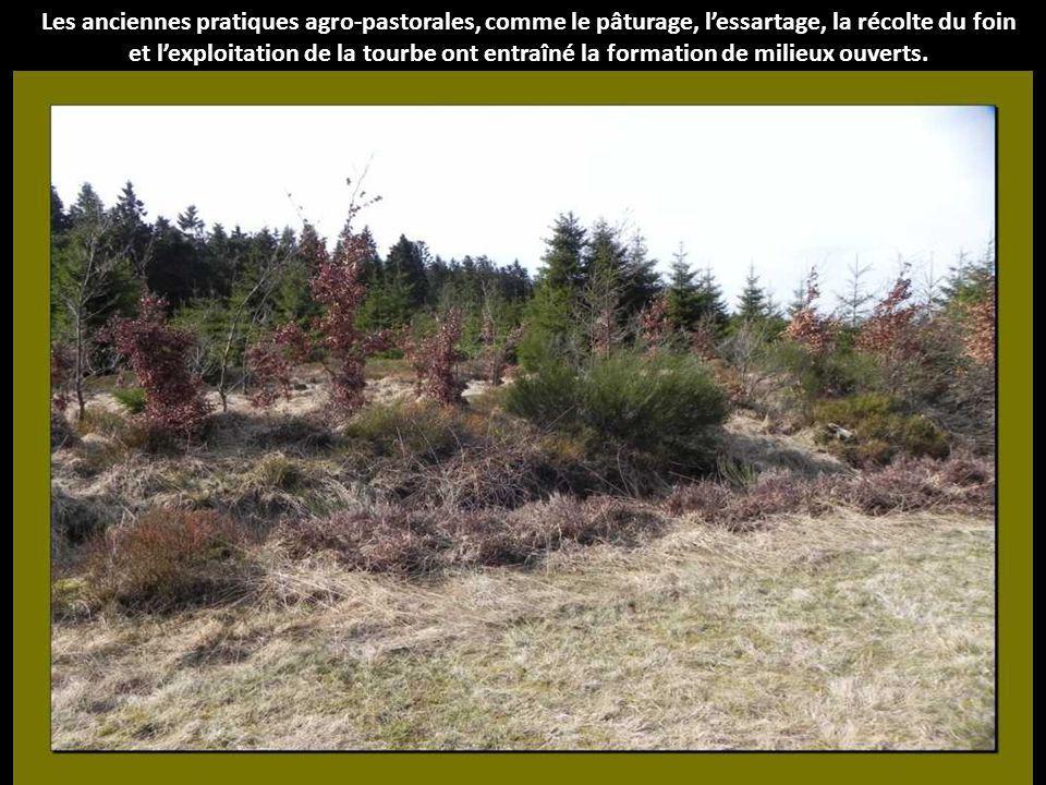 Le paysage fagnard daujourdhui cest formé en grande partie sous linfluence de lhomme.