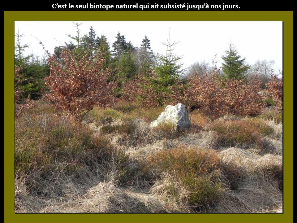 Cela a fait régresser fortement la superficie des tourbières, qui étaient jadis les seules zones non boisées