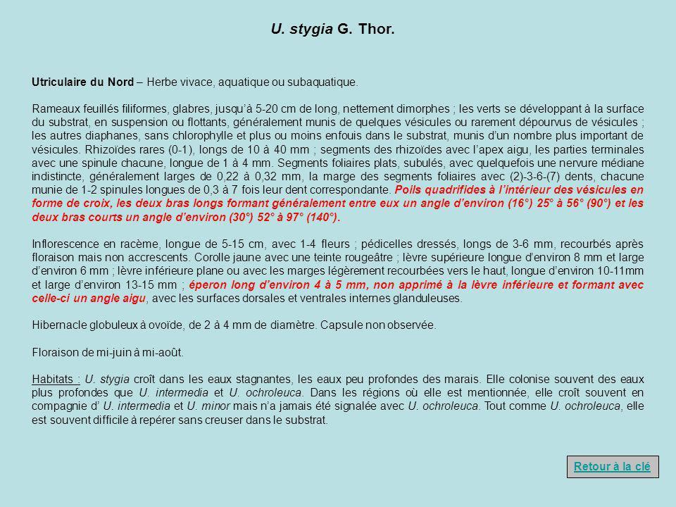 U. stygia G. Thor. Utriculaire du Nord – Herbe vivace, aquatique ou subaquatique. Rameaux feuillés filiformes, glabres, jusquà 5-20 cm de long, nettem