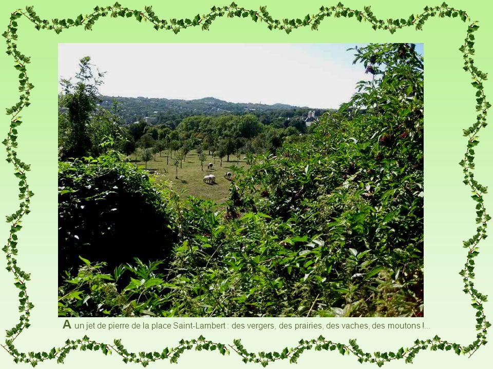 A un jet de pierre de la place Saint-Lambert : des vergers, des prairies, des vaches, des moutons !...