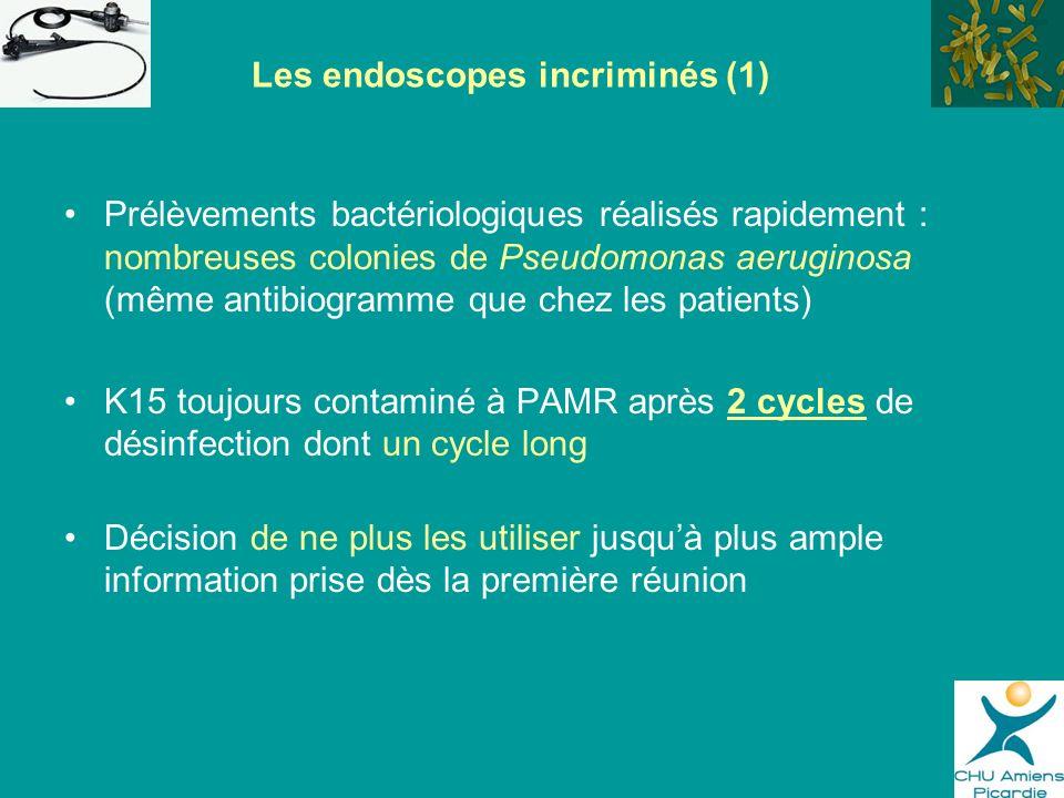 Prélèvements bactériologiques réalisés rapidement : nombreuses colonies de Pseudomonas aeruginosa (même antibiogramme que chez les patients) K15 toujo