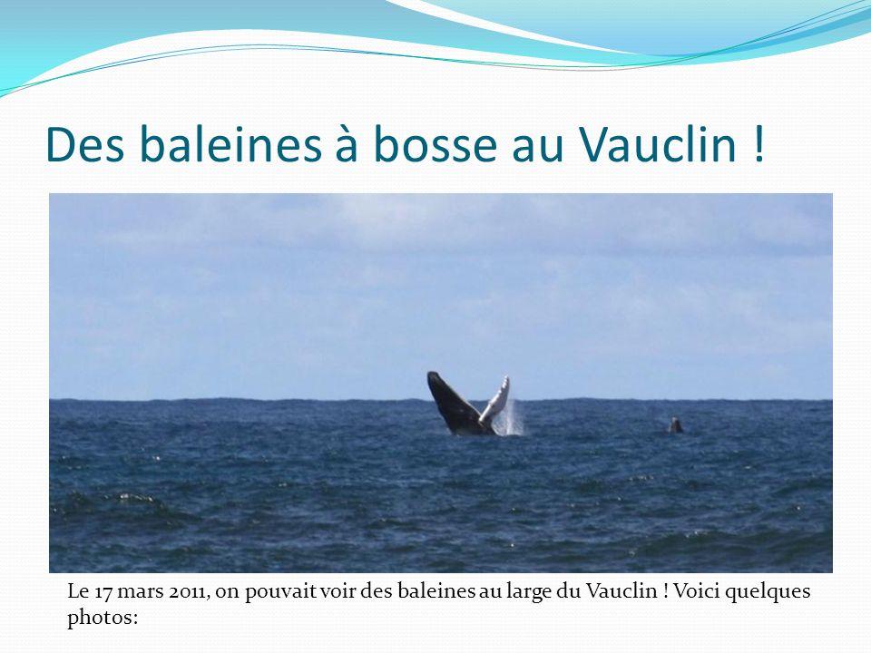 Des baleines à bosse au Vauclin ! Le 17 mars 2011, on pouvait voir des baleines au large du Vauclin ! Voici quelques photos: