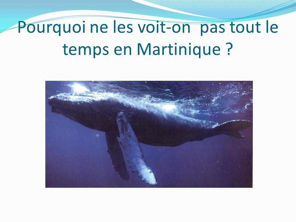Pourquoi ne les voit-on pas tout le temps en Martinique ?