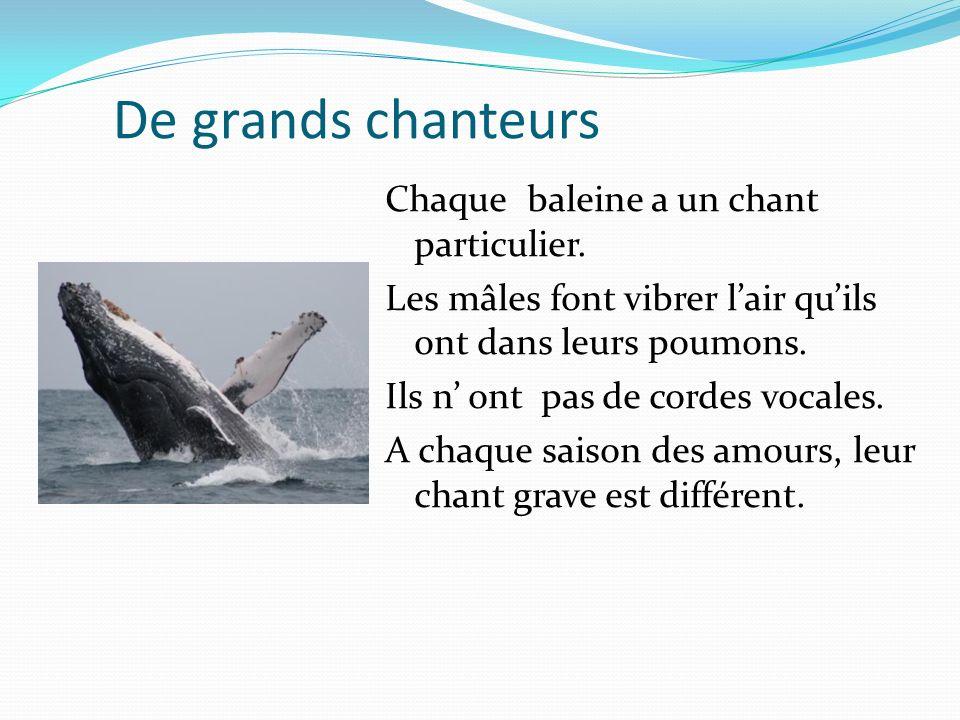 De grands chanteurs Chaque baleine a un chant particulier. Les mâles font vibrer lair quils ont dans leurs poumons. Ils n ont pas de cordes vocales. A