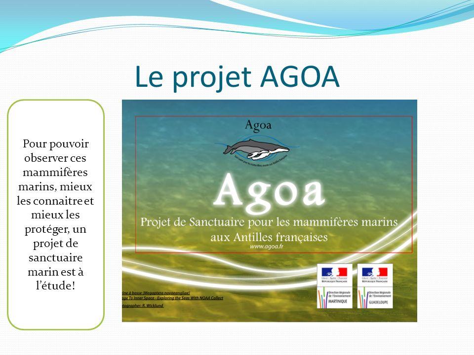 Le projet AGOA Pour pouvoir observer ces mammifères marins, mieux les connaitre et mieux les protéger, un projet de sanctuaire marin est à létude!
