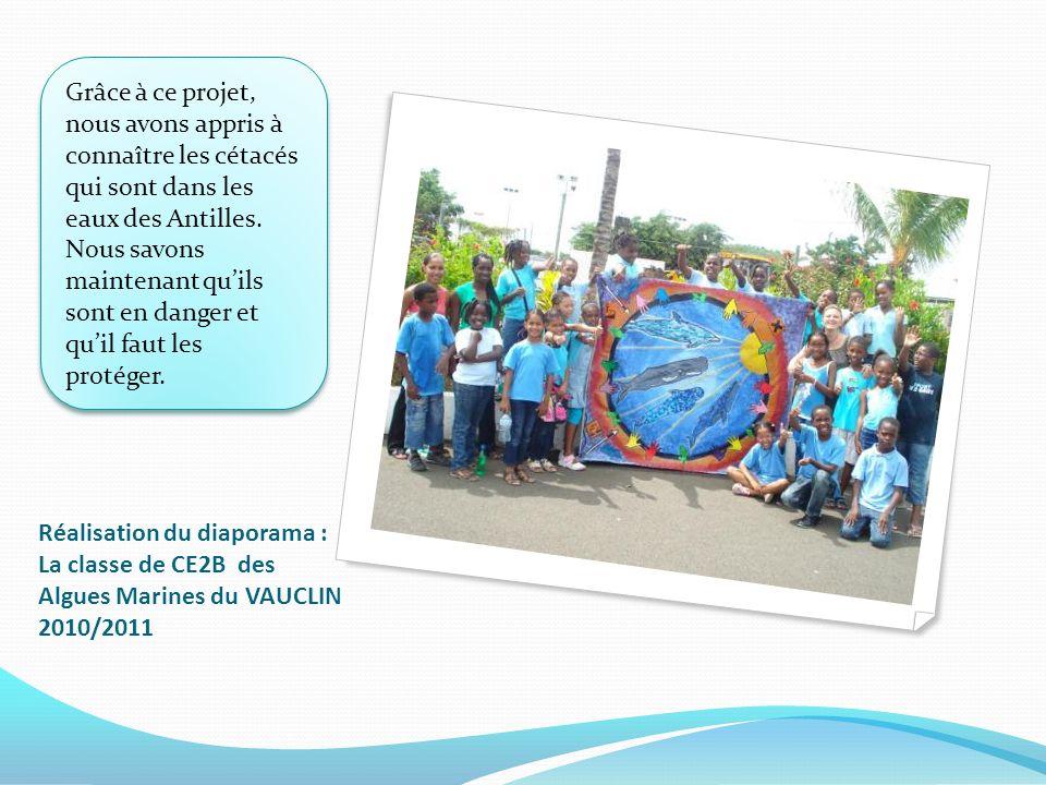 Réalisation du diaporama : La classe de CE2B des Algues Marines du VAUCLIN 2010/2011 Grâce à ce projet, nous avons appris à connaître les cétacés qui