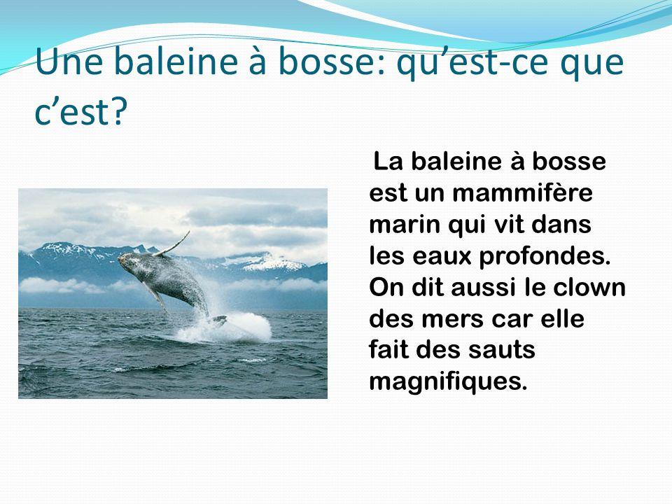Une baleine à bosse: quest-ce que cest? La baleine à bosse est un mammifère marin qui vit dans les eaux profondes. On dit aussi le clown des mers car