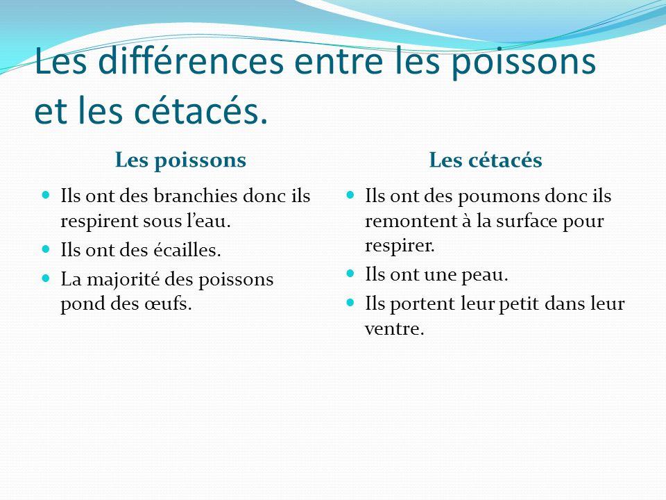 Les différences entre les poissons et les cétacés. Les poissons Les cétacés Ils ont des branchies donc ils respirent sous leau. Ils ont des écailles.
