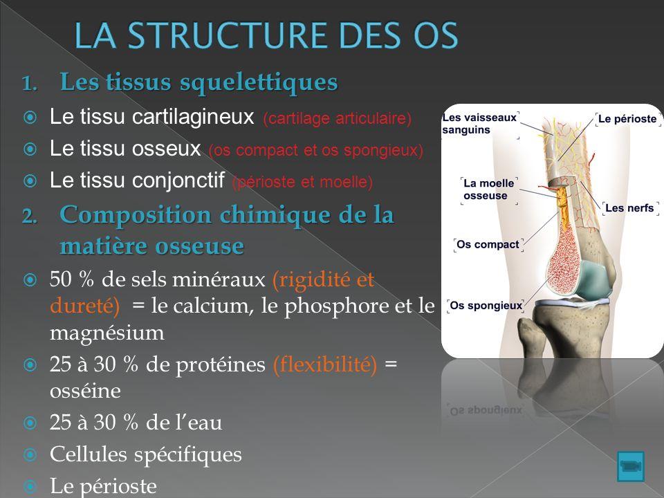 EpauleBras Avant-bras Supérieur : Epaule (omoplate- clavicule), Bras (humérus),Avant-bras (radius- cubitus) carpes-métacarpes-phalanges Main : carpes-