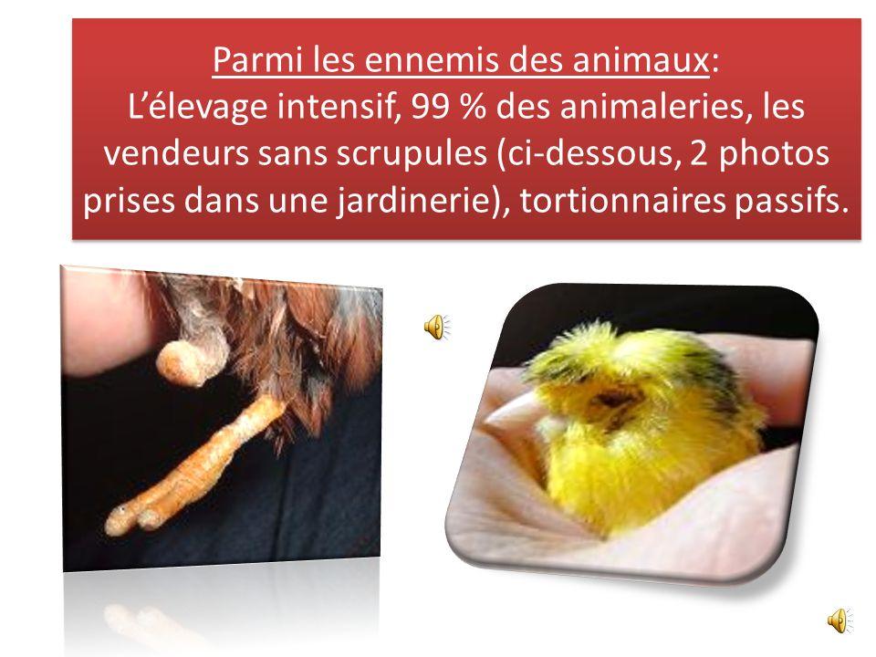 Parmi les ennemis des animaux: Lélevage intensif, 99 % des animaleries, les vendeurs sans scrupules (ci-dessous, 2 photos prises dans une jardinerie), tortionnaires passifs.