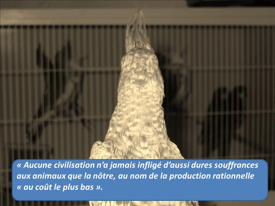 « Aucune civilisation na jamais infligé daussi dures souffrances aux animaux que la nôtre, au nom de la production rationnelle « au coût le plus bas ».