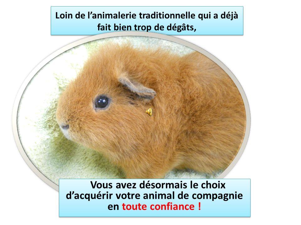 Loin de lanimalerie traditionnelle qui a déjà fait bien trop de dégâts, Vous avez désormais le choix dacquérir votre animal de compagnie en toute confiance !