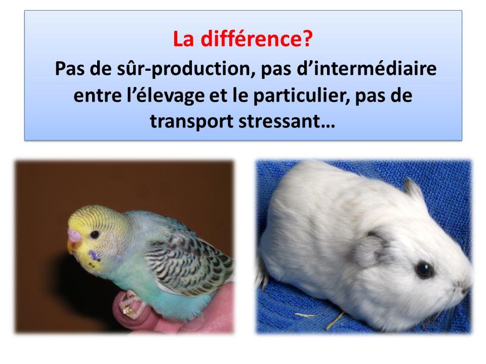 DOMESTIK PARK, depuis 2007, est un élevage non intensif danimaux de compagnie (Lapins nains, rongeurs, oiseaux, poissons)