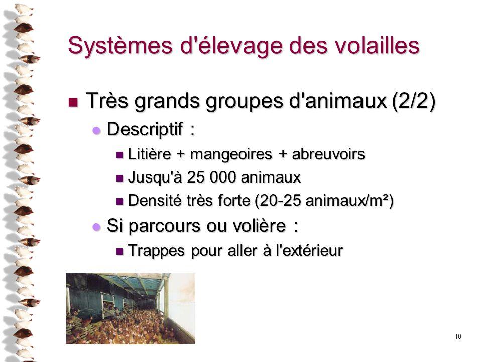 10 Systèmes d'élevage des volailles Très grands groupes d'animaux (2/2) Très grands groupes d'animaux (2/2) Descriptif : Descriptif : Litière + mangeo