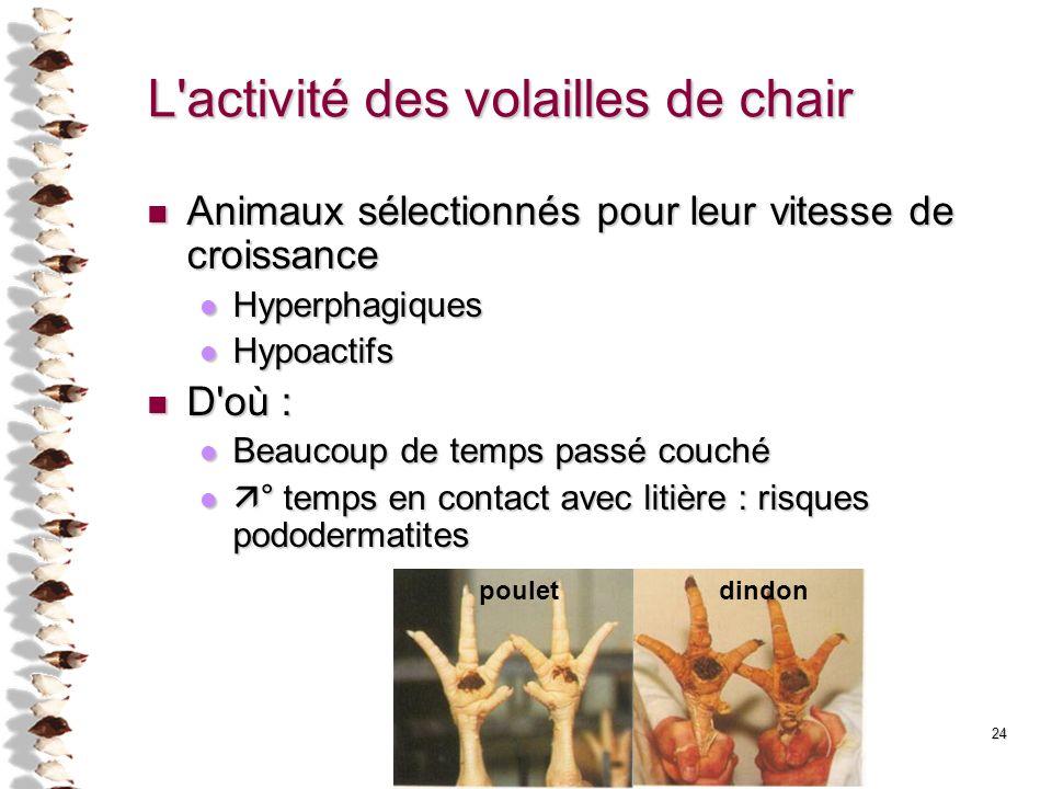 24 L'activité des volailles de chair Animaux sélectionnés pour leur vitesse de croissance Animaux sélectionnés pour leur vitesse de croissance Hyperph