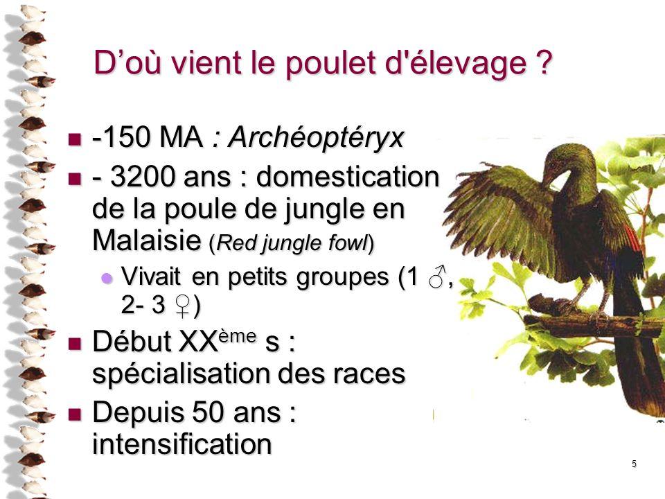5 Doù vient le poulet d'élevage ? -150 MA : Archéoptéryx -150 MA : Archéoptéryx - 3200 ans : domestication de la poule de jungle en Malaisie (Red jung