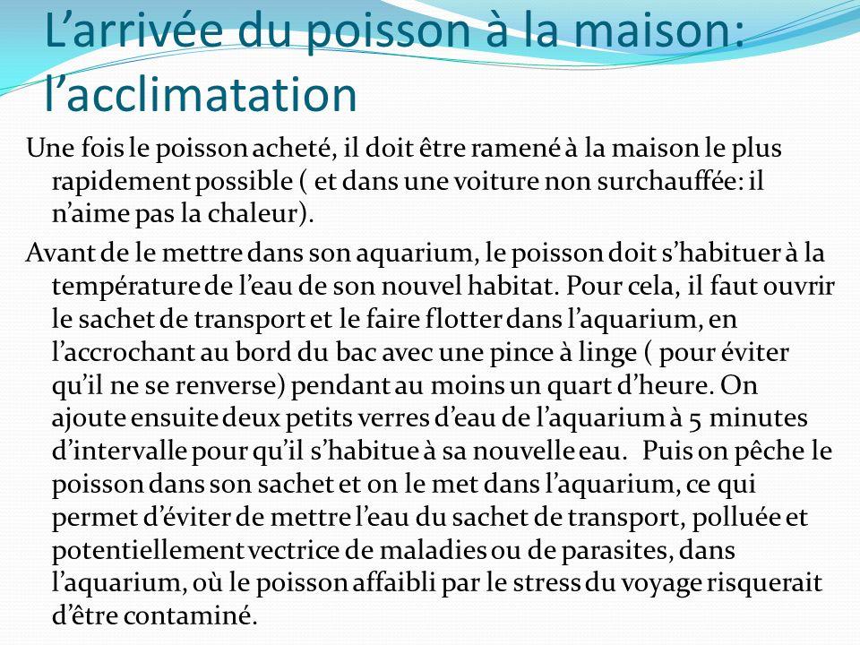 Larrivée du poisson à la maison: lacclimatation Une fois le poisson acheté, il doit être ramené à la maison le plus rapidement possible ( et dans une voiture non surchauffée: il naime pas la chaleur).