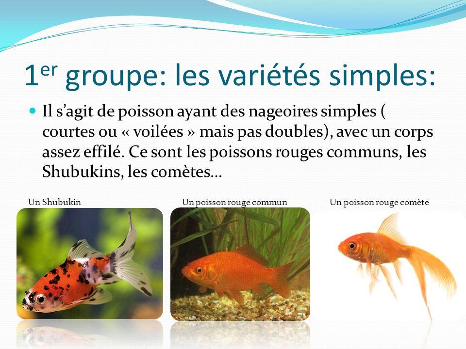 1 er groupe: les variétés simples: Il sagit de poisson ayant des nageoires simples ( courtes ou « voilées » mais pas doubles), avec un corps assez effilé.