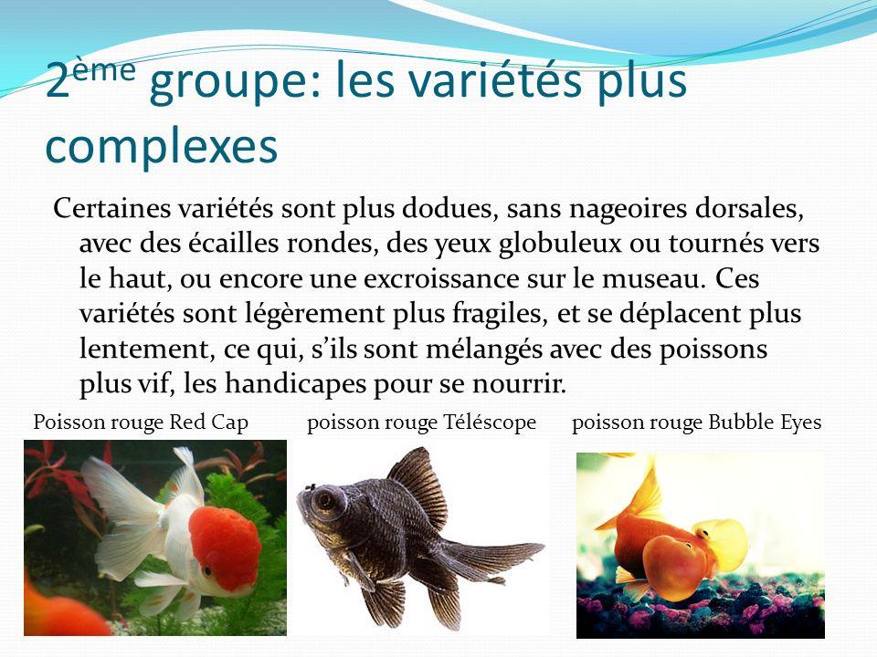 2 ème groupe: les variétés plus complexes Certaines variétés sont plus dodues, sans nageoires dorsales, avec des écailles rondes, des yeux globuleux ou tournés vers le haut, ou encore une excroissance sur le museau.