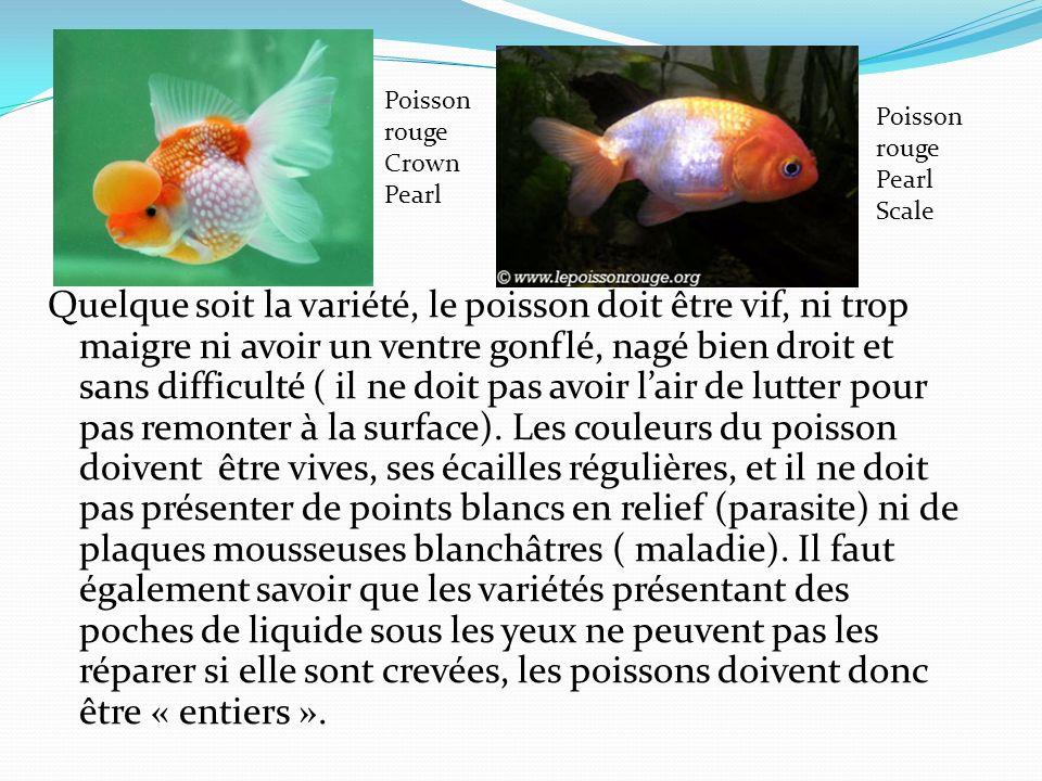 Quelque soit la variété, le poisson doit être vif, ni trop maigre ni avoir un ventre gonflé, nagé bien droit et sans difficulté ( il ne doit pas avoir lair de lutter pour pas remonter à la surface).