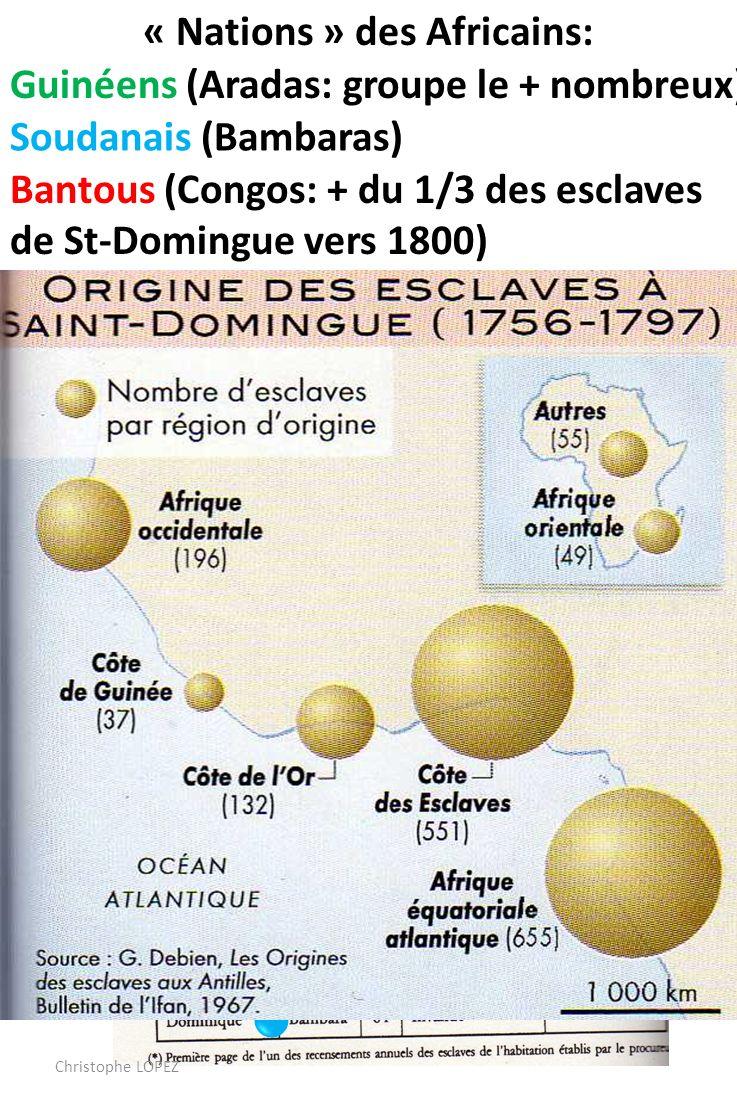 « Nations » des Africains: Guinéens (Aradas: groupe le + nombreux) Soudanais (Bambaras) Les créoles représentent Les 2/3 des esclaves en 1789 Bantous (Congos: + du 1/3 des esclaves de St-Domingue vers 1800) Christophe LOPEZ