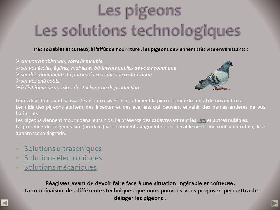 Très sociables et curieux, à l'affût de nourriture, les pigeons deviennent très vite envahissants : sur votre habitation, votre immeuble sur vos école