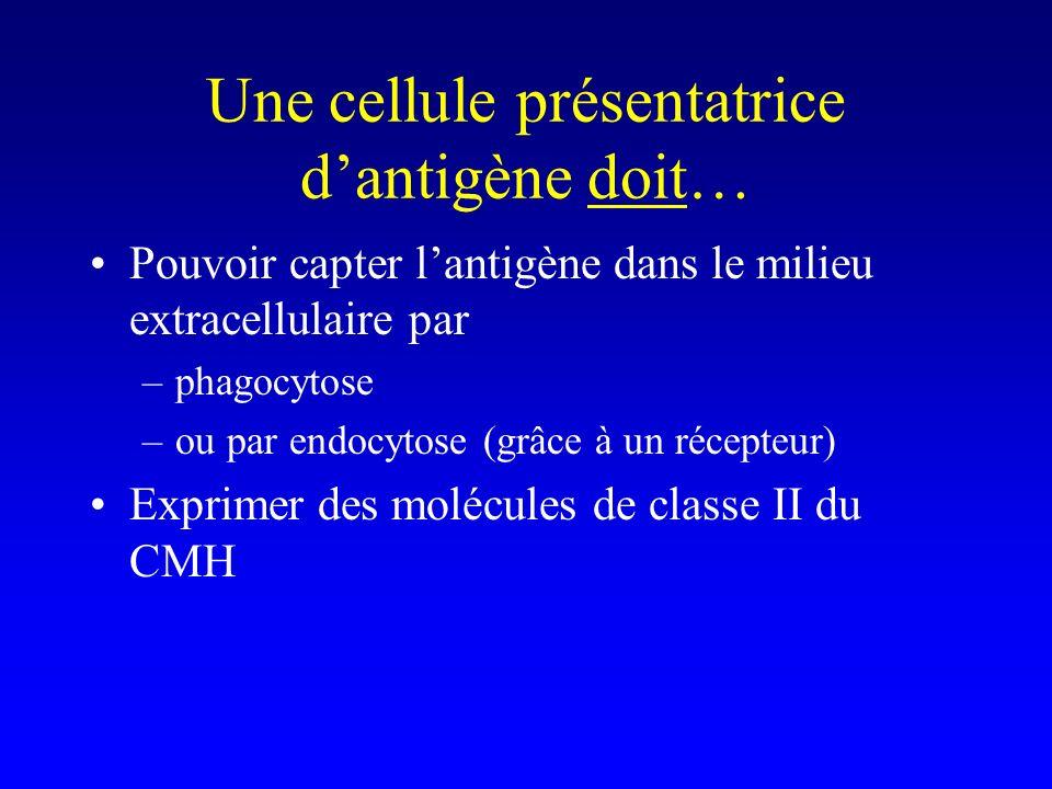 Une cellule présentatrice dantigène doit… Pouvoir capter lantigène dans le milieu extracellulaire par –phagocytose –ou par endocytose (grâce à un réce