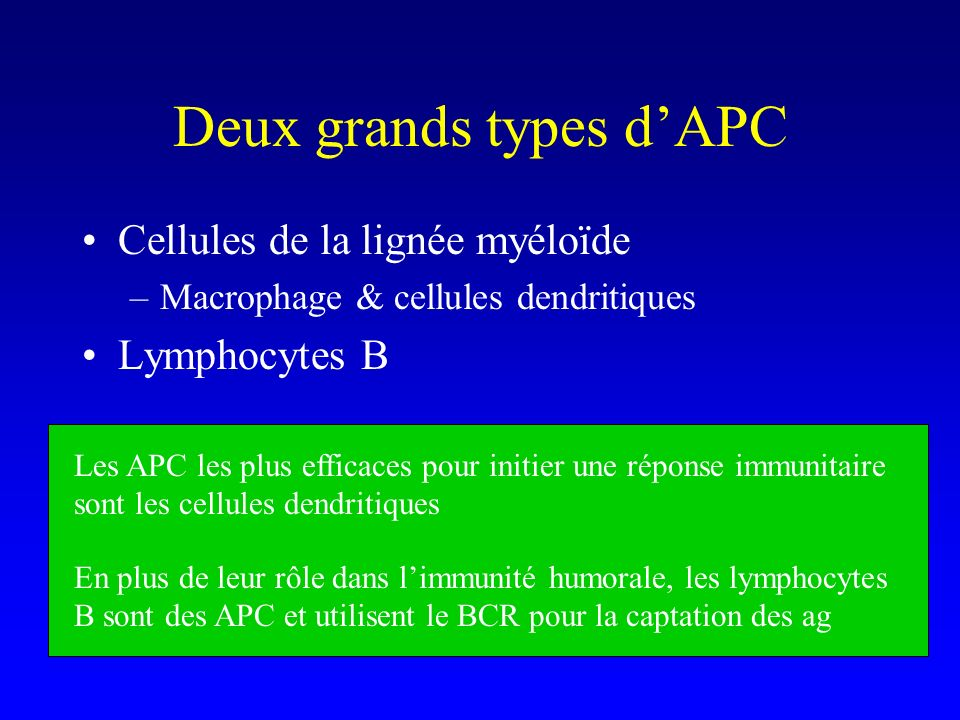 Deux grands types dAPC Cellules de la lignée myéloïde –Macrophage & cellules dendritiques Lymphocytes B Les APC les plus efficaces pour initier une ré