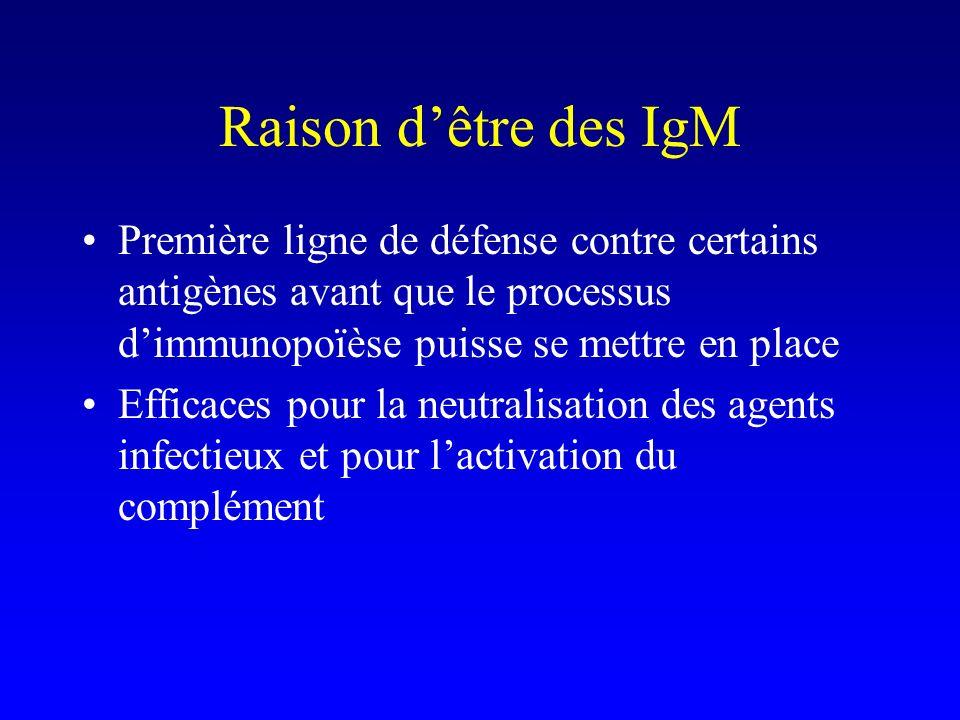 Raison dêtre des IgM Première ligne de défense contre certains antigènes avant que le processus dimmunopoïèse puisse se mettre en place Efficaces pour