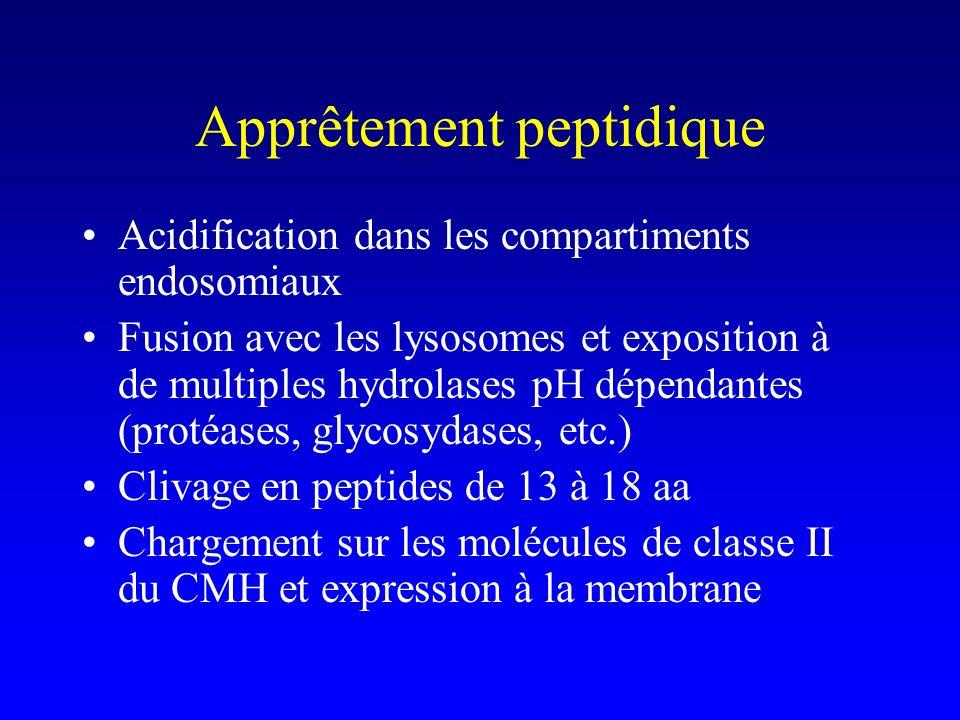 Apprêtement peptidique Acidification dans les compartiments endosomiaux Fusion avec les lysosomes et exposition à de multiples hydrolases pH dépendant