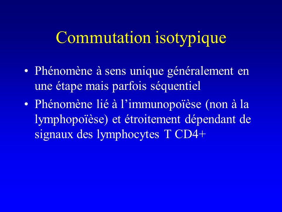 Commutation isotypique Phénomène à sens unique généralement en une étape mais parfois séquentiel Phénomène lié à limmunopoïèse (non à la lymphopoïèse)