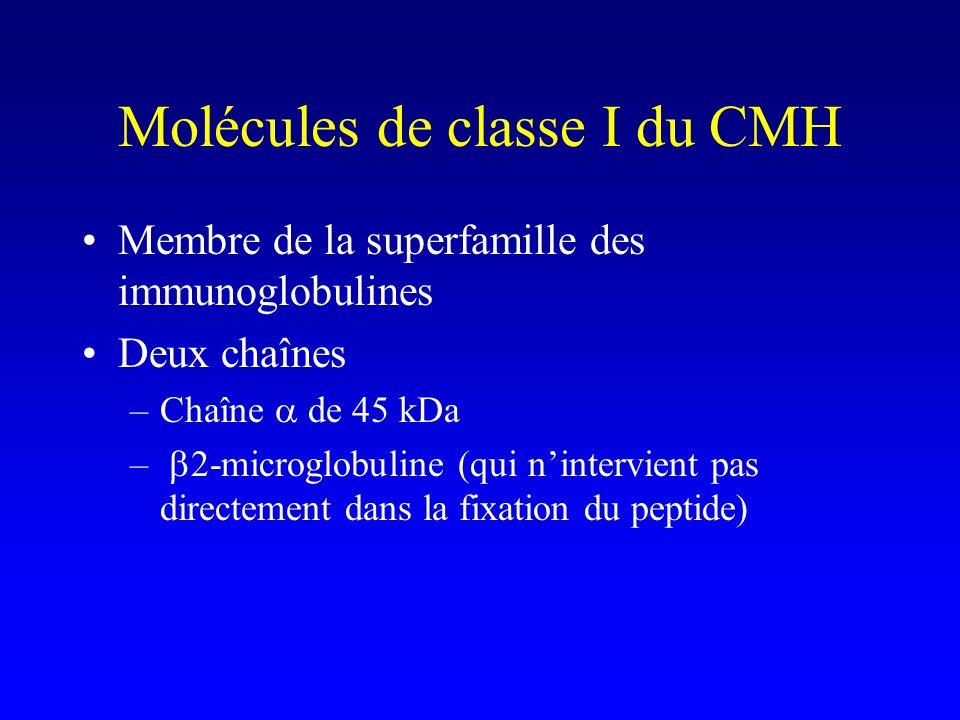 Membre de la superfamille des immunoglobulines Deux chaînes –Chaîne de 45 kDa – 2-microglobuline (qui nintervient pas directement dans la fixation du