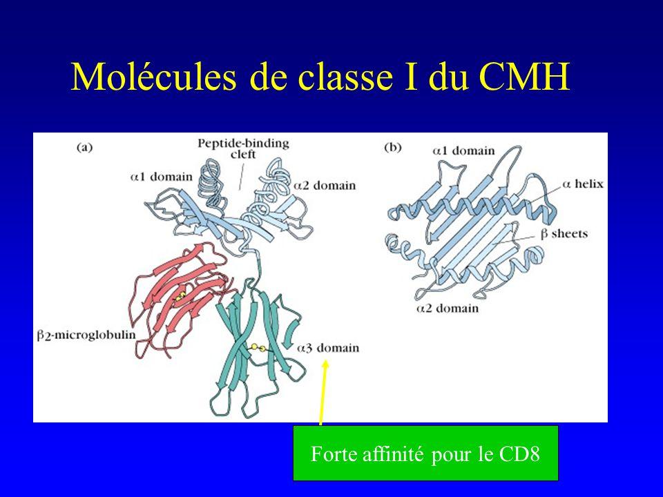 Molécules de classe I du CMH Forte affinité pour le CD8