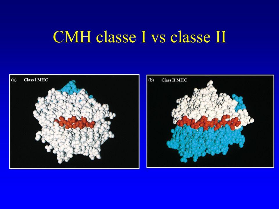 CMH classe I vs classe II