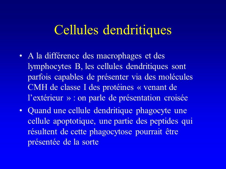 Cellules dendritiques A la différence des macrophages et des lymphocytes B, les cellules dendritiques sont parfois capables de présenter via des moléc