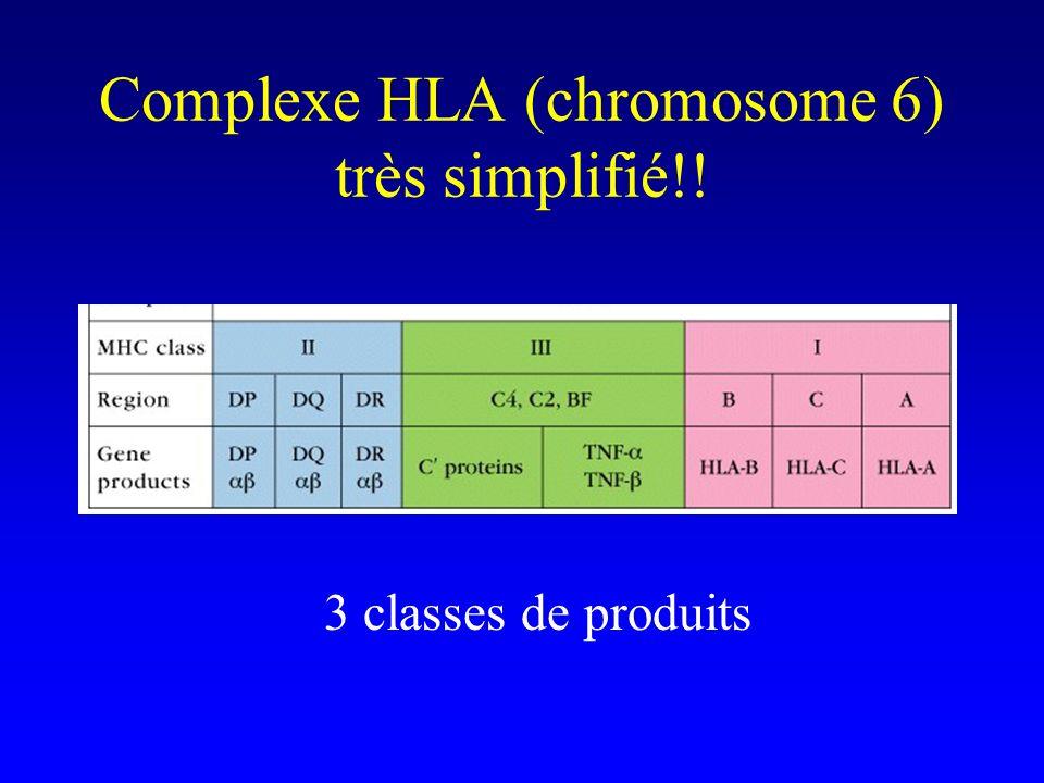 Complexe HLA (chromosome 6) très simplifié!! 3 classes de produits