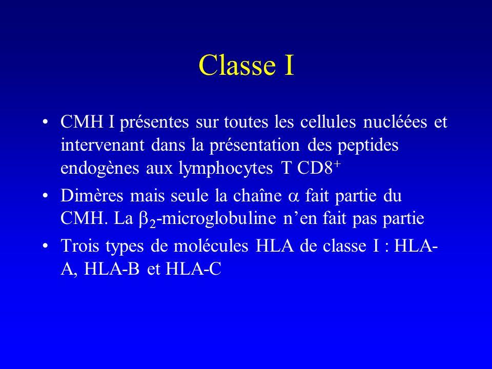 Classe I CMH I présentes sur toutes les cellules nucléées et intervenant dans la présentation des peptides endogènes aux lymphocytes T CD8 + Dimères m
