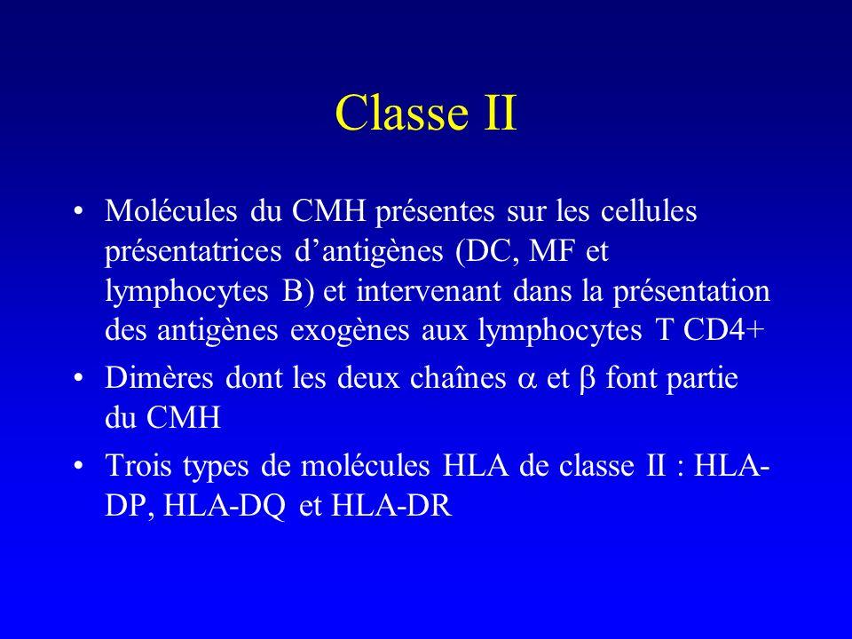 Classe II Molécules du CMH présentes sur les cellules présentatrices dantigènes (DC, MF et lymphocytes B) et intervenant dans la présentation des anti