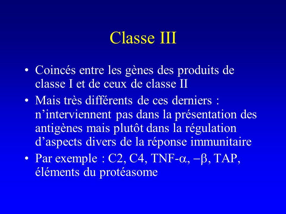 Classe III Coincés entre les gènes des produits de classe I et de ceux de classe II Mais très différents de ces derniers : ninterviennent pas dans la