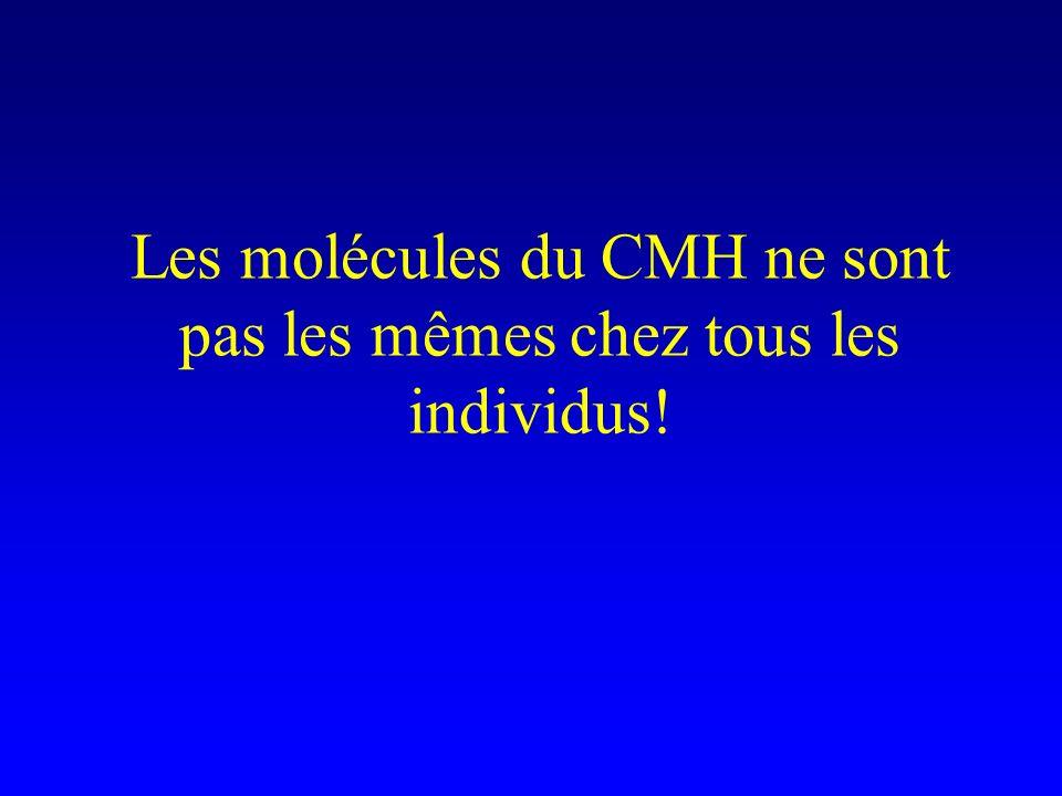 Les molécules du CMH ne sont pas les mêmes chez tous les individus!