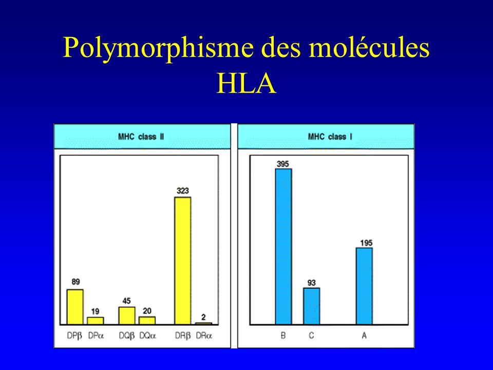 Polymorphisme des molécules HLA
