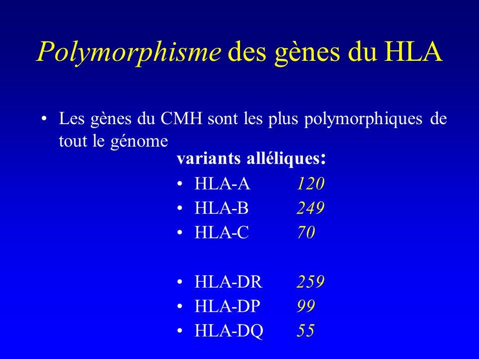 Polymorphisme des gènes du HLA Les gènes du CMH sont les plus polymorphiques de tout le génome variants alléliques : HLA-A 120 HLA-B249 HLA-C70 HLA-DR