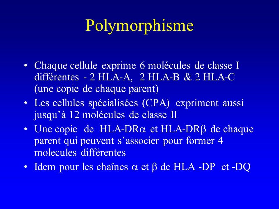 Polymorphisme Chaque cellule exprime 6 molécules de classe I différentes - 2 HLA-A, 2 HLA-B & 2 HLA-C (une copie de chaque parent) Les cellules spécia