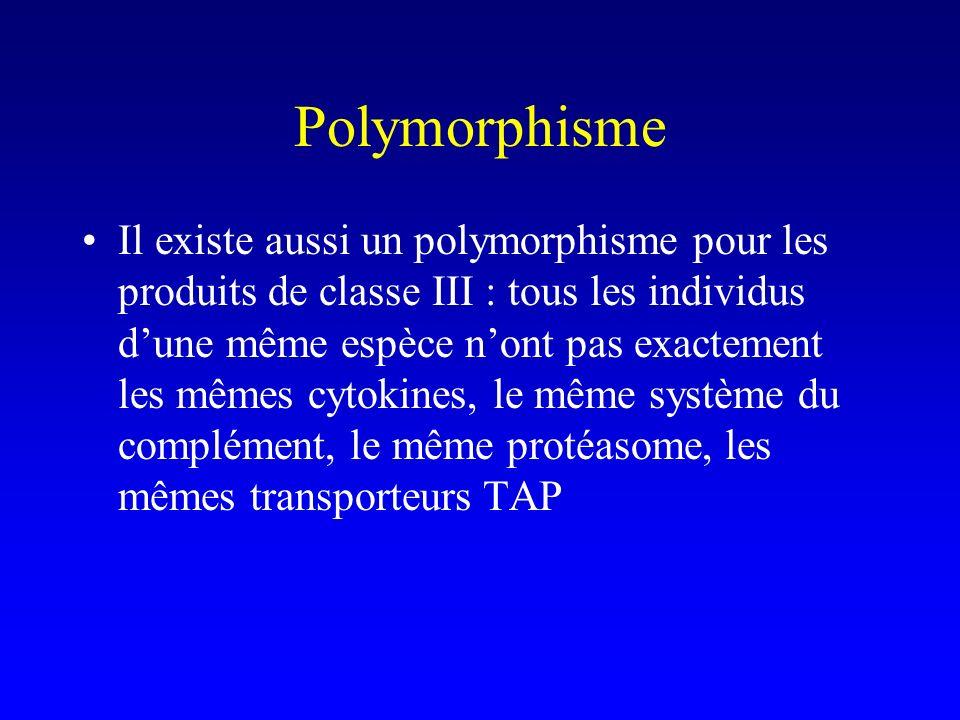 Polymorphisme Il existe aussi un polymorphisme pour les produits de classe III : tous les individus dune même espèce nont pas exactement les mêmes cyt