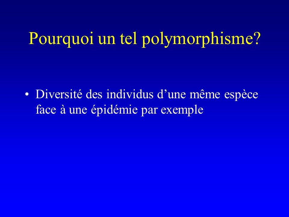 Pourquoi un tel polymorphisme? Diversité des individus dune même espèce face à une épidémie par exemple