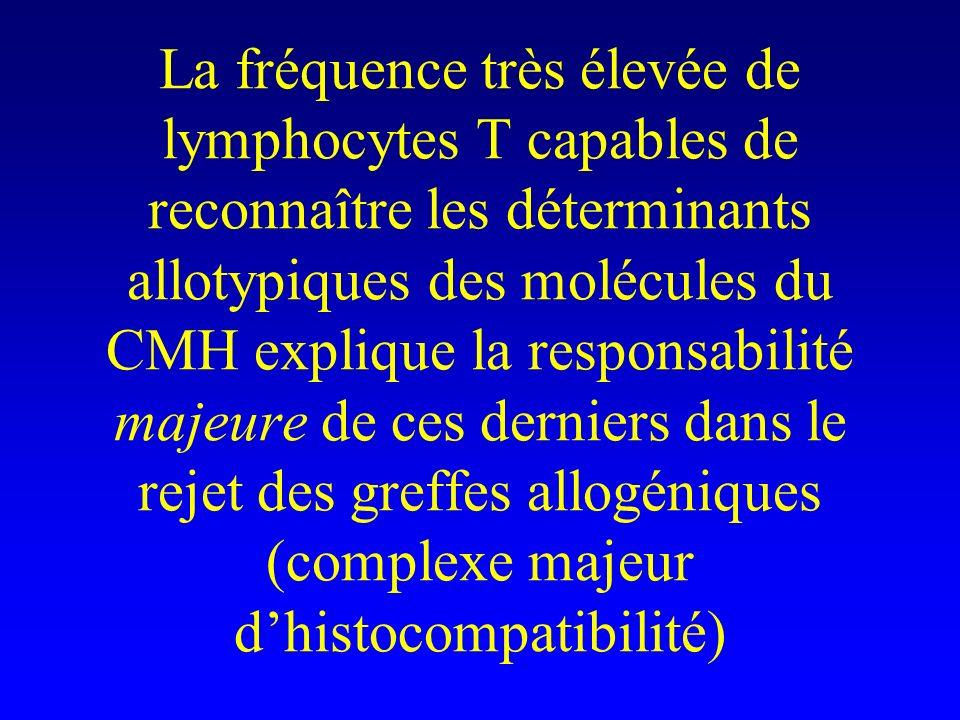 La fréquence très élevée de lymphocytes T capables de reconnaître les déterminants allotypiques des molécules du CMH explique la responsabilité majeur