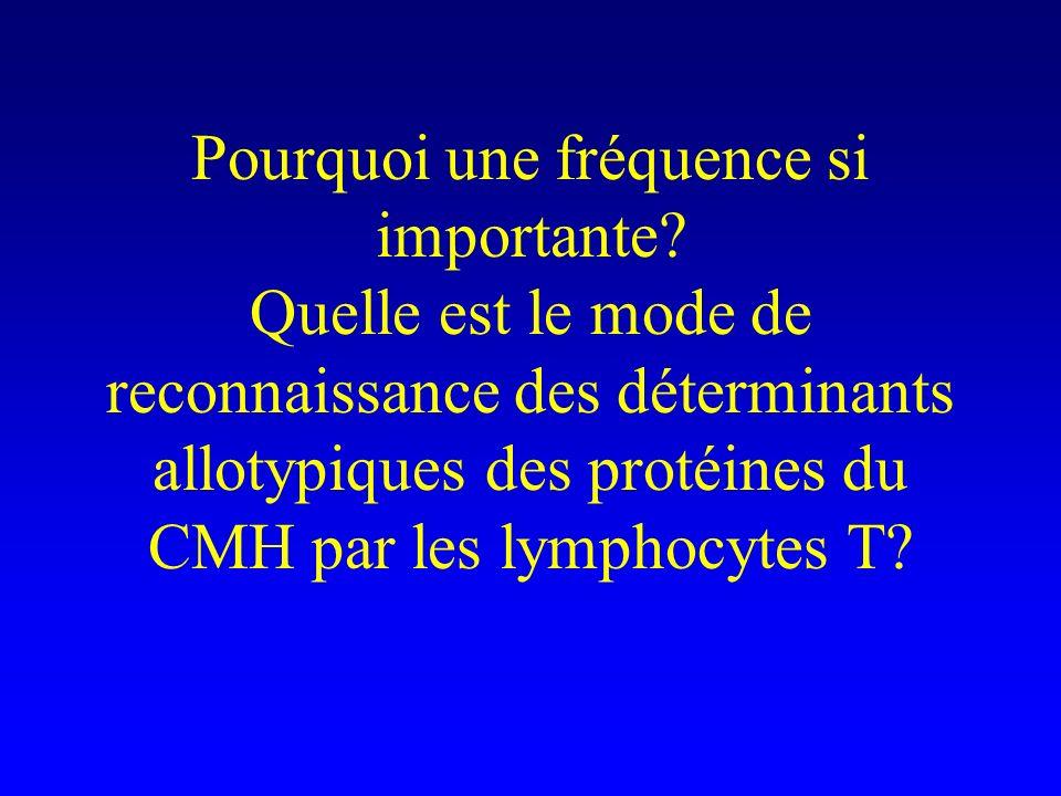 Pourquoi une fréquence si importante? Quelle est le mode de reconnaissance des déterminants allotypiques des protéines du CMH par les lymphocytes T?