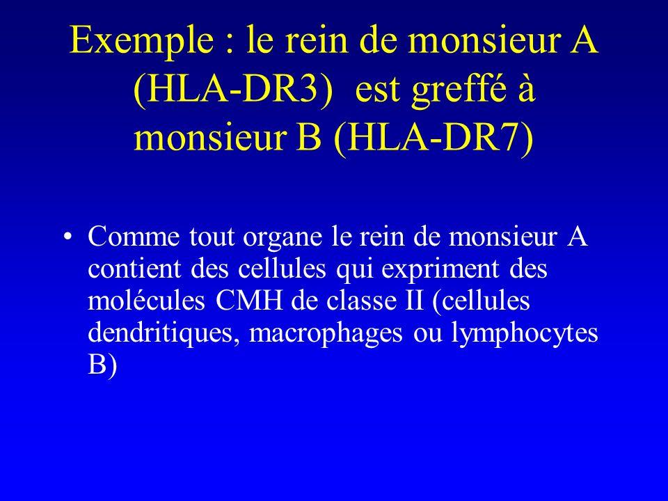 Exemple : le rein de monsieur A (HLA-DR3) est greffé à monsieur B (HLA-DR7) Comme tout organe le rein de monsieur A contient des cellules qui exprimen