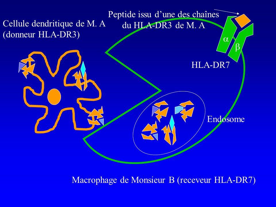 Cellule dendritique de M. A (donneur HLA-DR3) Macrophage de Monsieur B (receveur HLA-DR7) Endosome HLA-DR7 Peptide issu dune des chaînes du HLA-DR3 de
